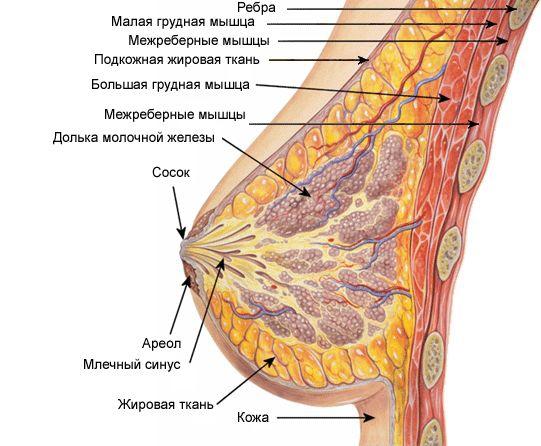 Реально увеличить грудь можно, стимулируя и укрепляя ткани молочных желез